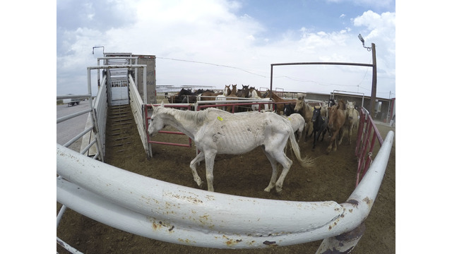 Horse slaughter controversy still rages