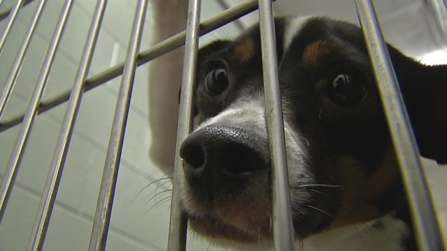 Franklin Co. Dog Shelter waiving adoption fees this weekend