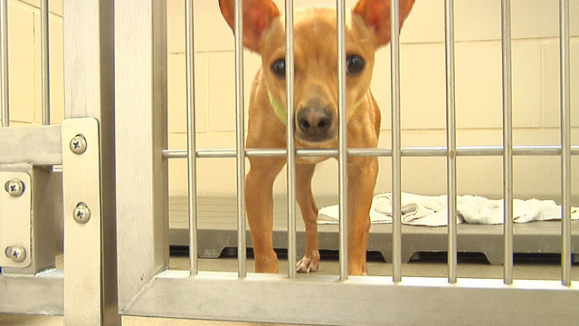 Fairfield Area Humane Society offering adoption discount to make room for neglected dogs