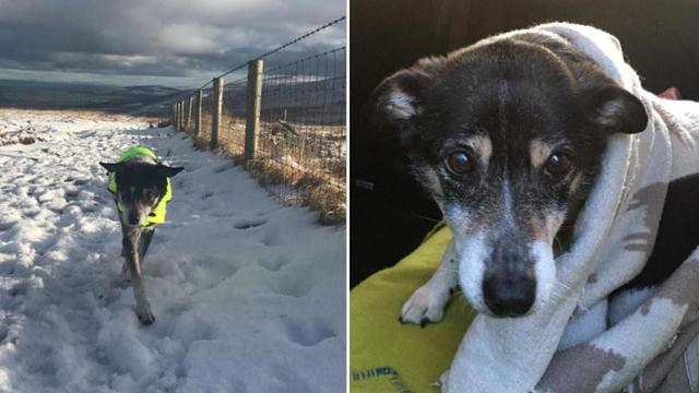 Elderly and Nearly Deaf Dog Found Safe After Wandering in Snow for 10 Days
