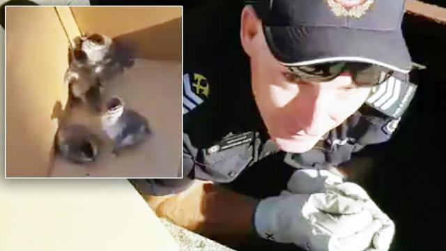 5 Ducklings Rescued from Drain Pipe as Mother Duck Watches From Nearby