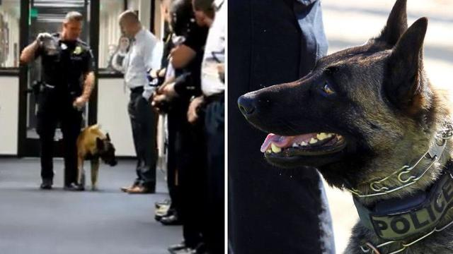 K-9 gets a round of applause as he's walked into retirement