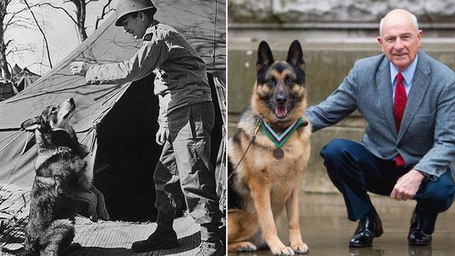 Chips, a U.S. Army Hero Dog That Served in World War II Gets Posthumous Medal