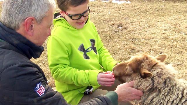 Blind Boy Surprised With Braille Book After Meeting Its Main Character, Peanut the Blind Sheep