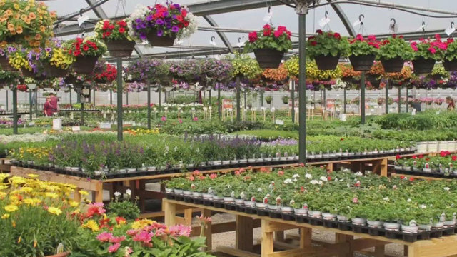 Top Spots: 5 of the best greenhouses and garden centers in central Ohio