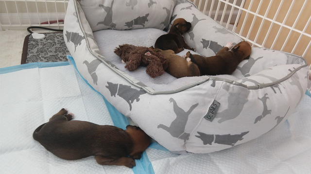 Puppy Cam Dog Gives Birth To Puppies After Being Rescued From