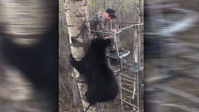 WATCH: Boy, 14, gets unexpected face-to-face encounter with bear cub