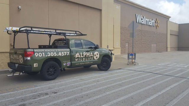 Raccoons invade Tennessee Walmart, forcing store to close