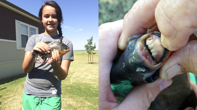 11-year-old girl catches fish with human-like teeth