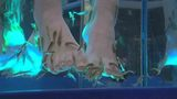 Fish pedicure spas operate without oversight in Ohio&#x3b; banned in some states